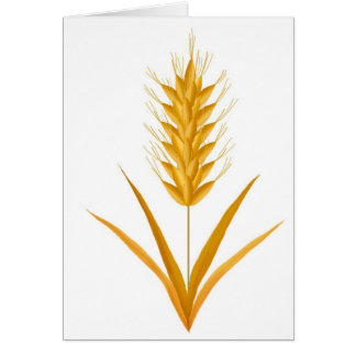 Golden Wheat Greeting Card