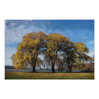 Golden Willows Poster