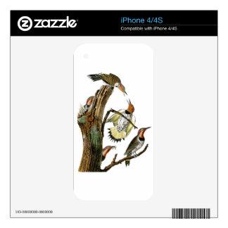 Golden-winged Woodpecker Audubon Birds of America iPhone 4S Decals