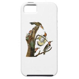 Golden-winged Woodpecker Audubon Birds of America iPhone SE/5/5s Case