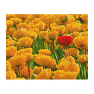 Golden Yellow And Red Tulips Flowers Fields Floral Wood Wall Art