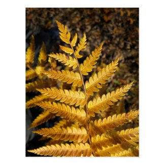 Golden Yellow Fern Fall Leaves Photo Postcard