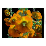 Golden Yellow Hollyhochs gifts Greeting Card