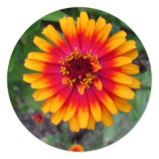 Golden Yellow Orange Zinnia Flower Card