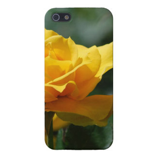 Golden Yellow Rose Bud iPhone 5 Covers
