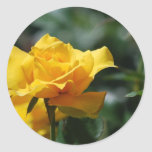 Golden Yellow Rose Bud Stickers
