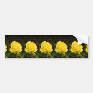 Golden Yellow Rose Isolated on Black Background Bumper Sticker