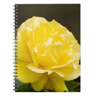 Golden Yellow Rose Isolated on Black Background Spiral Note Book