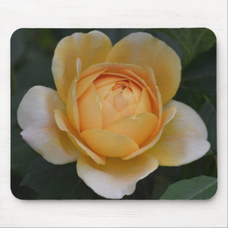 Golden Yellow Rose Mouse Pad