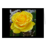 Golden Yellow Rose with Garden Background Greeting Card