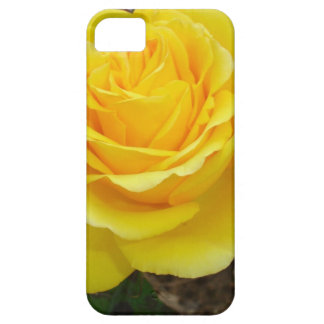 Golden Yellow Rose with Garden Background iPhone 5 Covers