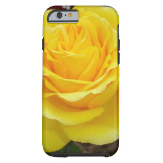 Golden Yellow Rose with Garden Background iPhone 6 Case