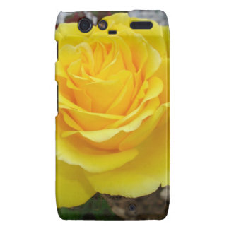 Golden Yellow Rose with Garden Background Droid RAZR Covers