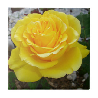 Golden Yellow Rose with Garden Background Ceramic Tile