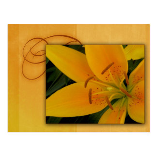 Golden yellow tiger lily for fall postcards