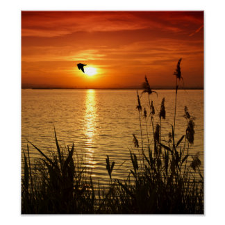Golden Zen Sunset Poster
