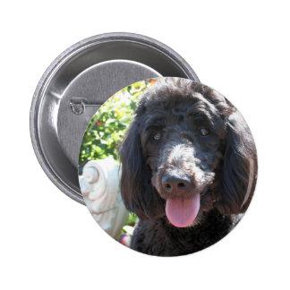 GoldenDoodle Abby 1 2 Inch Round Button