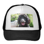 GoldenDoodle Abby 1 Hat