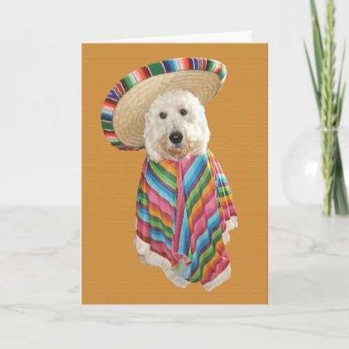 Goldendoodle Cinco de Mayo card
