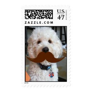 Goldendoodle / Doodle Mustache Stamp