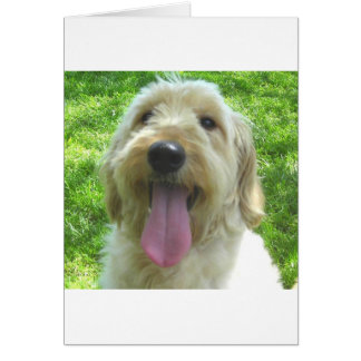 Goldendoodle Products Greeting Card