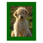 Goldendoodle Puppy Dog Blank Green Postcard