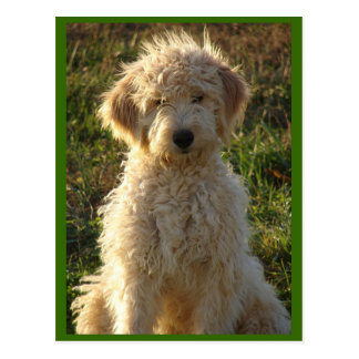 Goldendoodle Puppy Dog Blank Greeting Postcard