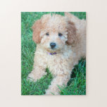 "Goldendoodle Puppy Puzzle<br><div class=""desc"">Adorable Goldendoodle puppy poses on lawn.</div>"