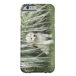 Goldendoodle puppy sitting under tall grasses barely there iPhone 6 case