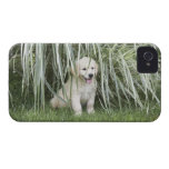 Goldendoodle puppy sitting under tall grasses Case-Mate iPhone 4 case