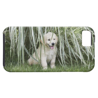 Goldendoodle puppy sitting under tall grasses iPhone SE/5/5s case