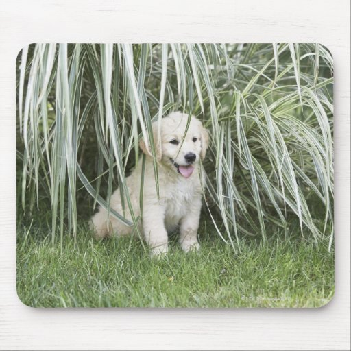 Goldendoodle puppy sitting under tall grasses mouse pads