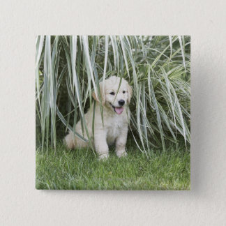 Goldendoodle puppy sitting under tall grasses pinback button