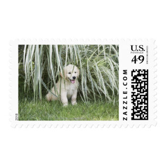 Goldendoodle puppy sitting under tall grasses postage