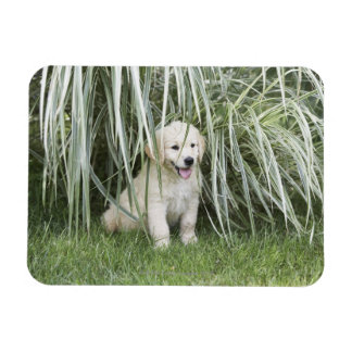 Goldendoodle puppy sitting under tall grasses rectangular photo magnet