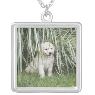 Goldendoodle puppy sitting under tall grasses silver plated necklace
