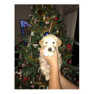 GoldenDoodle Puppy With Christmas Tree Postcard