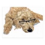 Goldendoodle Stella Postcard
