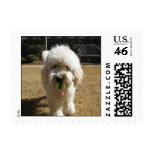 Goldendoodle with Ball Stamp