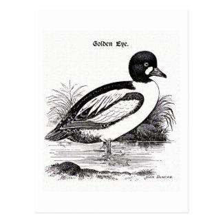 Goldeneye Duck Postcard