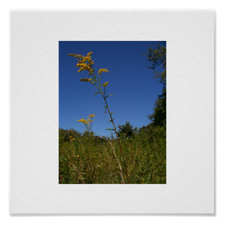 goldenrod and sky poster