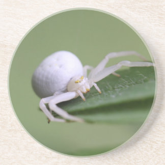Goldenrod crab spider or flower crab spider coaster