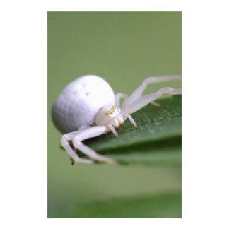 Goldenrod crab spider or flower crab spider stationery