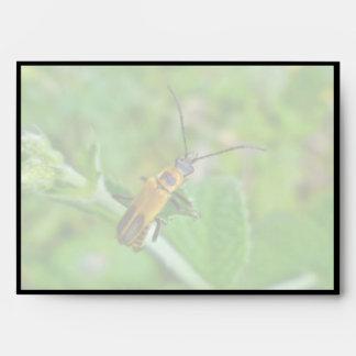 Goldenrod Soldier Beetle Envelope