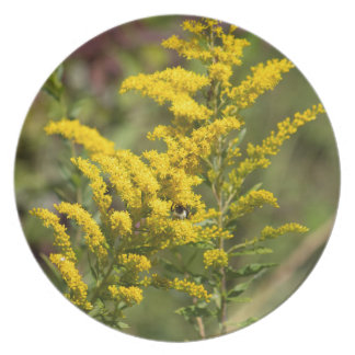 Goldenrod Wildflowers Plate