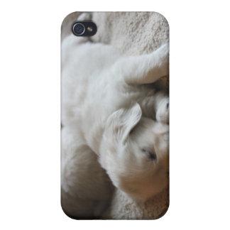Goldens poner crema inglés iPhone 4 protectores