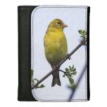 Goldfinch americano
