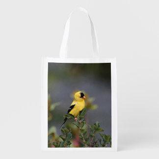 Goldfinch americano bolsas para la compra