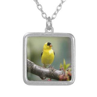 Goldfinch americano collares personalizados