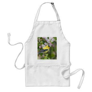 Goldfinch americano con los flores de la manzana delantales